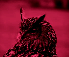 redowl